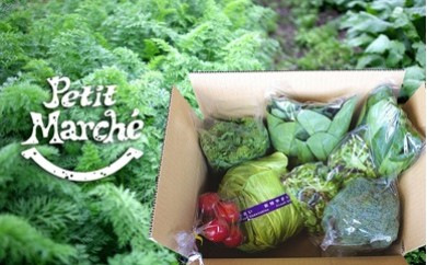 584 Petit Marchéお野菜BOX【米・農産物】