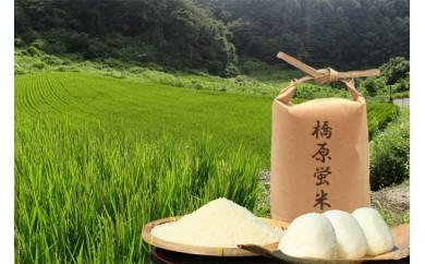 001-041 橋原蛍米(5kg)