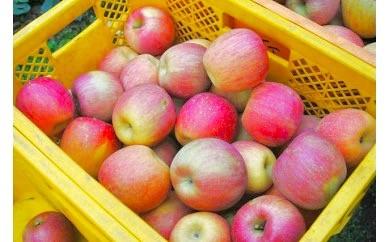 B-23 赤城南麓で育った 季節のりんご10Kg(先行受付2018年秋分)