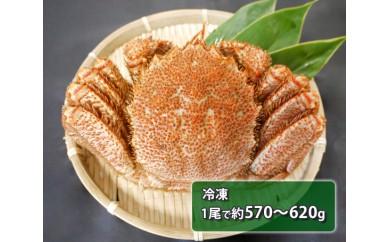 No.100 北海道産 毛がに 冷凍 (1尾で約570~620g) / 毛ガニ 蟹 北海道 人気