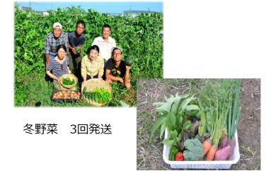農薬・化学肥料不使用「冬の野菜詰合せセット」