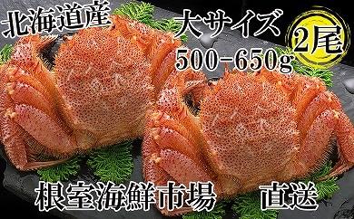CD-22009 根室海鮮市場<直送>浜ゆで毛がに500~650g×2尾[379177]