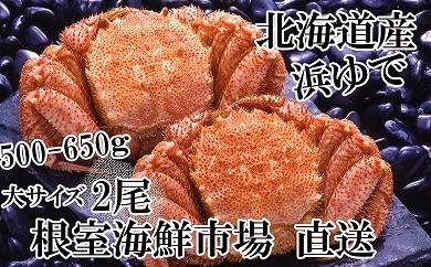 CD-14009 根室海鮮市場<直送>浜ゆで毛がに500~650g×2尾[379167]