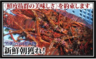 地元朝獲れ!産地直送!伊勢海老(レシピ付き)400g