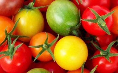[№5786-1007]トリアンジュトマト(ミニ) 5色のミニトマトが入ったジュエリーボックス 1.5キロ