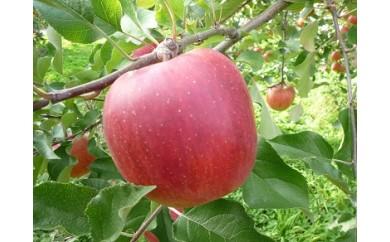 I-134-7 もぎたてりんご サンふじ 秀5kg