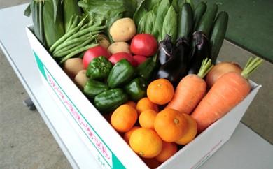 [№5786-1524]野菜セット