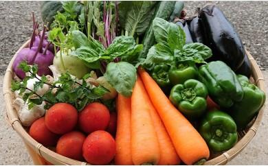 A-091 「極野菜」 旬の極上お野菜セット