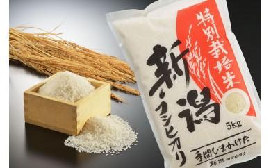 1791038 平成29年産 新潟県認証特別栽培米コシヒカリ 白米6㎏