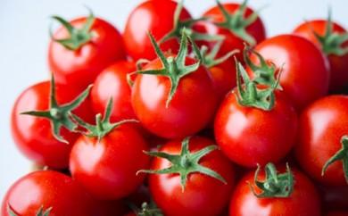 A117:出雲の最高級トマト、トマトを超えた「超トマト」1kg