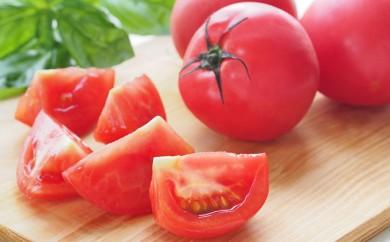 [№5641-0377]レギュラートマト約4kg<2018年配送>