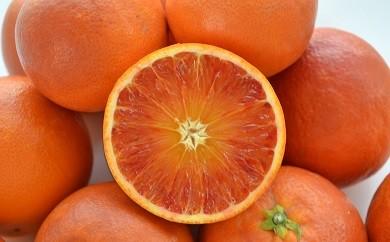 A02-725 ブラッドオレンジ(タロッコ)【4月~5月上旬お届け】