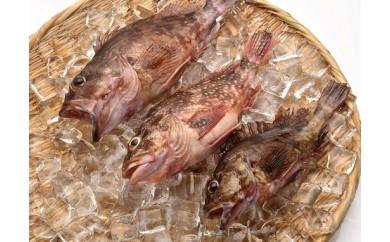 【CS15】「愛海の恵み」大分豊後水道産 天然カサゴ(約2kg 6~15匹)【24,000pt】