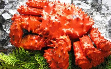 [№4630-0469]北海道産 ボイル花咲蟹(姿)400g×3尾