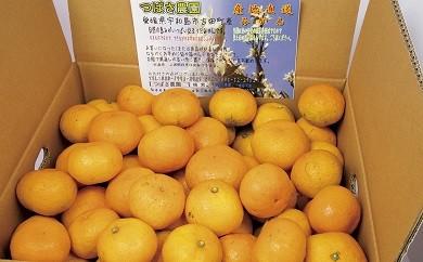 A02-704 早生温州(つばさ農園)【11月お届け】