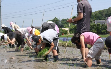 [№5810-0178]田植え・収穫体験、田植機・コンバイン試乗体験と特別栽培米コシヒカリ(精米10kg)