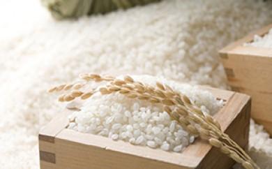 [№5673-0119]志村さんが作った お米コシヒカリ15kg