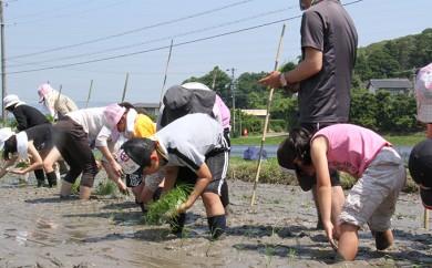 [№5810-0179]田植え・収穫体験、田植機・コンバイン試乗体験と特別栽培米コシヒカリ(玄米30kg)