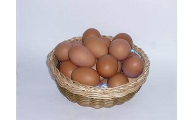 AA-1 いちき農園のこだわり卵(15個)