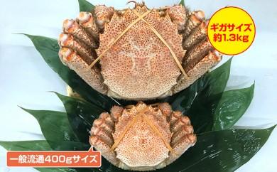 [№4630-0506]【限定】ギガサイズ北海道産ボイル毛がに約1.3kg
