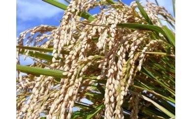 AS05_【新米】平成30年古河市産 特別栽培米コシヒカリ15kg【小久保農園】