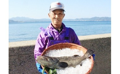 E-020 ★対馬と交流★幻の魚アラ(クエ)2.5㎏前後1匹神経〆【鍋・刺身用セット】