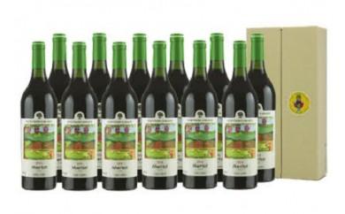 0062-009 赤ワイン12本セット【メルロ(赤)】