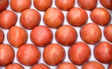 [№5724-0165]<2018年6月下旬より順次お届け>こだわり フルーツトマト(20玉以上)