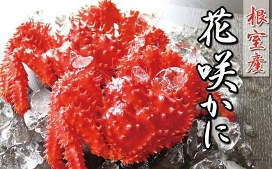CC-16003 【北海道根室産】花咲ガニ500g前後×10尾[385456]