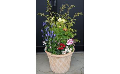 C-003 季節の花の寄せ植え 30cm鉢 ピック付き