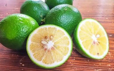 SN001  有機栽培で育てた有機マイヤーレモン 2.5㎏