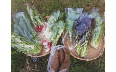 固定種野菜セット(10月から4月)