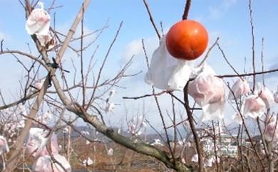 [№5905-0066]大野町産特選富有柿2個