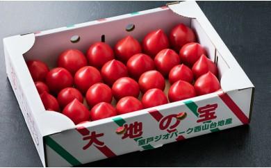 HM-01ルネッサンストマト