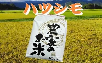 [№5644-0346]池田町農家 特別栽培米ハツシモ 10㎏白米/玄米
