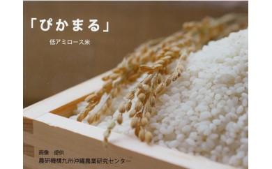 61.無農薬 低アミロース米「ぴかまる」<5kg>※11月~発送