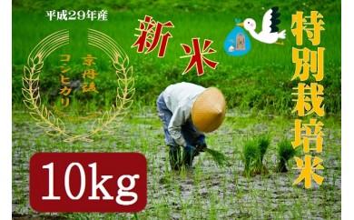 R035 平成29年度 新米 特別栽培米 京都産 京丹後コシヒカリ 10kg 【180pt】