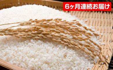 [№5528-0020]【平成29年産】手取りのすず風米こしひかり 白米5kg入 6ヶ月連続