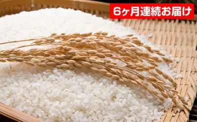 [№5528-0021]【平成29年産】手取りのすず風米こしひかり 白米10kg 6ヶ月連続