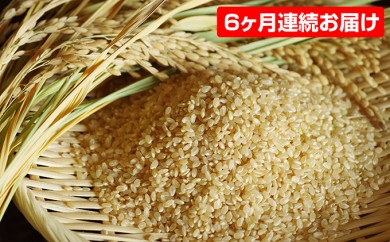 [№5528-0022]【平成29年産】手取りのすず風米こしひかり 玄米10kg 6ヶ月連続