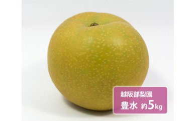 No.039 越阪部梨園 豊水 約5kg