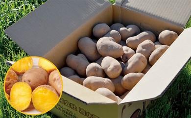 [№5724-0164]<2018年9月中旬より順次お届け>幻のジャガイモ インカのめざめ約7kg