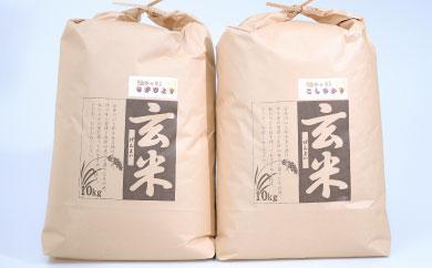 D-103 佐賀県産米「さがびより」&「コシヒカリ」 10kg×2種セット【玄米食べ比べ!!】