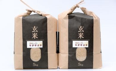 B-157 佐賀県産米「さがびより(玄米)」 最上級厳選!!10kg【8年連続特A受賞】