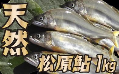 015-007 山形県小国川 【天然】 松原鮎