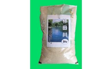 お米「きぬむすめ」5キロ