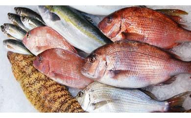 まるごと1年 魚・魚・魚~♪ C