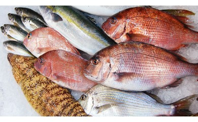 まるごと1年 魚・魚・魚~♪ B
