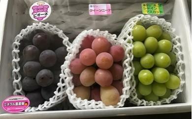 C161 中村柿ぶどう園 種なしぶどう3種セット