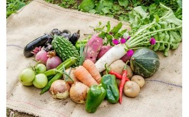 【新規格】MOA自然農法(植物性資材のみ使用)農薬不使用野菜100%の野菜セットA